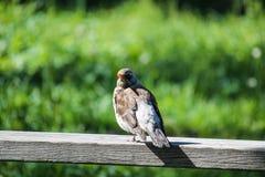 Liten fågel på ett staket royaltyfri foto