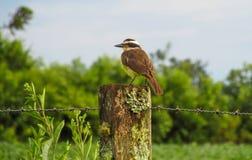 Liten fågel på ett staket royaltyfria bilder