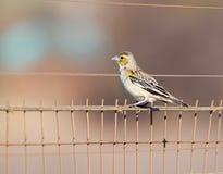 Liten fågel på staketet Royaltyfri Bild