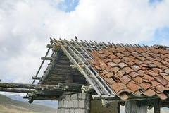 Liten fågel på taket av en smula byggnad på paramoen royaltyfri foto
