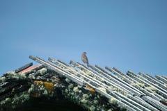 Liten fågel på taket av en smula byggnad på paramoen arkivbilder