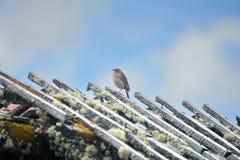 Liten fågel på taket av en smula byggnad på paramoen royaltyfria foton