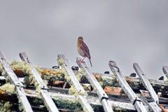 Liten fågel på taket av en smula byggnad på paramoen arkivfoton