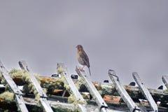 Liten fågel på taket av en smula byggnad på paramoen fotografering för bildbyråer