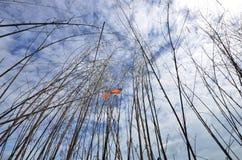 Liten fågel på torkat träd under blå himmel Arkivbilder