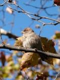 Liten fågel på träd Royaltyfria Bilder