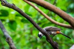 Liten fågel på trädet Fotografering för Bildbyråer
