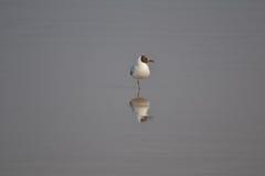 Liten fågel som kopplar av på stranden Royaltyfria Bilder