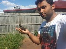 Liten fågelavverkning på jordning Arkivfoto