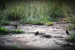 Liten fågelfyndmat i morgon Royaltyfria Bilder