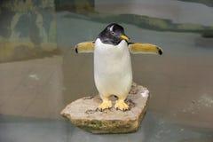 Liten felik pingvin fotografering för bildbyråer