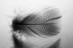 Liten fjäder som vilar på exponeringsglas Arkivfoto