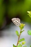 liten fjäril Royaltyfri Fotografi