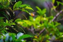 Liten fjäril i trädgård Royaltyfria Bilder