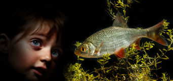 Liten flicka bak akvariet som ser på fisk Royaltyfria Foton