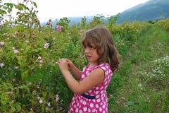 Liten flicka i dalen av rosor arkivfoton
