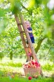 Liten flicka i en äppleträdgård Arkivbilder