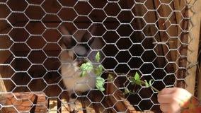 Liten flicka med bilden av blomman på matningar för en hand det kaninsidorna och gräset lager videofilmer
