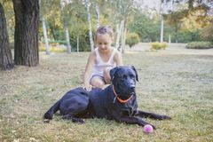 Liten flicka med henne förföljer svarta head labrador Fotografering för Bildbyråer