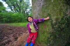 Liten flicka och forntida kamferträd-Cinnamomum camphora Arkivbild