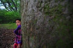 Liten flicka och forntida kamferträd-Cinnamomum camphora Fotografering för Bildbyråer