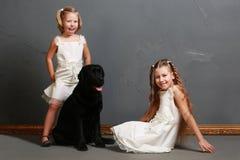 Liten flicka och hund i studion Arkivfoton