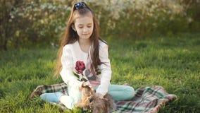 Liten flicka på en grön gräsmatta som spelar med en brun kanin arkivfilmer