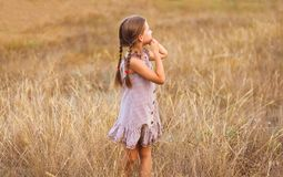 Liten flicka på ett vetefält med hennes holded händer royaltyfri foto