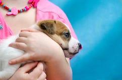 Liten flicka som kramar en avel för valpstålarrussel terrier Henne ` s som rymmer hunden på henne händer Royaltyfri Foto