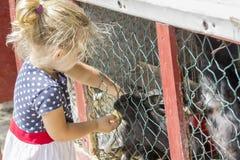 Liten flicka som matar en kanin Arkivbild