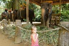 Liten flicka som står nära tämjde och bundna elefanter royaltyfria foton