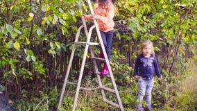 Liten flicka som upp mot efterkrav klättrar en stege och en start till plommoner stock video