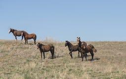 Liten flock av hästar Royaltyfri Foto