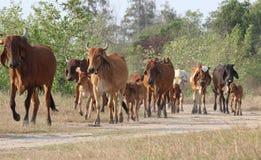 Liten flock av kor på äng Royaltyfria Bilder