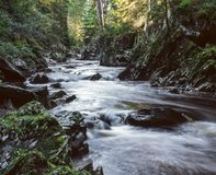 liten flod Arkivbilder