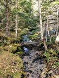 Liten flod bland skogen mycket av liv royaltyfria foton