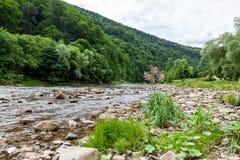 Liten flod i berg Arkivfoton