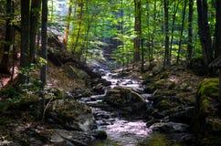 Liten flod i en skog Royaltyfria Bilder