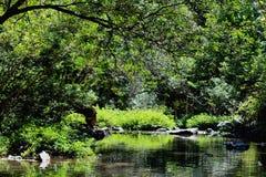 Liten flod i skogen Arkivfoton