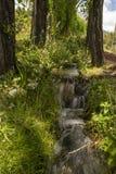 Liten flod i skogen mellan träden arkivbilder