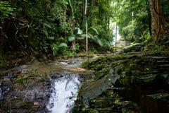 Liten flod i tropisk rainforest Arkivbild