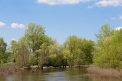 Liten flod med en nivå för högt vatten på en solig dag Arkivfoto