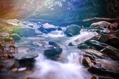 Liten flod med Moss Covered Stones i de ljus fyllda strålarna för sol ljus färg inom de rökiga bergen Arkivbilder