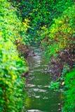 Liten flod med sidor av färgrika växter på slutet av hösten fotografering för bildbyråer