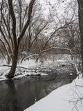 Liten flod med träd i vinter Royaltyfri Foto