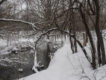 Liten flod med träd i vinter Arkivbild
