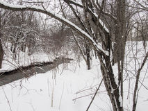 Liten flod med träd i vinter Royaltyfria Bilder