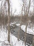 Liten flod med träd i vinter Royaltyfria Foton