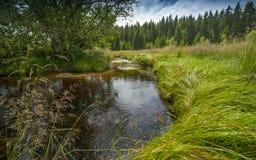Liten flod, nationalpark Sumava Arkivfoto