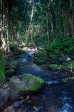 Liten flod på Kauai Royaltyfria Foton